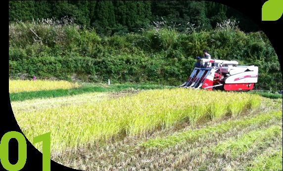 将来の日本のお米市場は供給過多?需給逼迫?