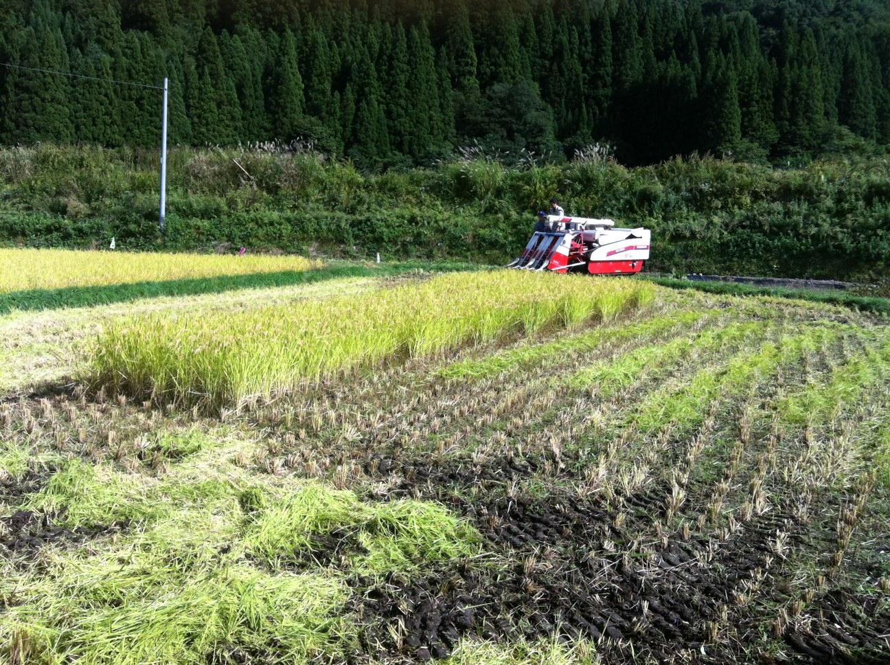 お米の価格は誰が決めているのか?①